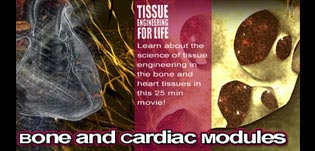 Thumbnail photo: Tissue Engineering for Life