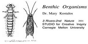 BenthicOrganisms